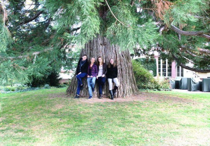 Studenten im Park vor einem Baum