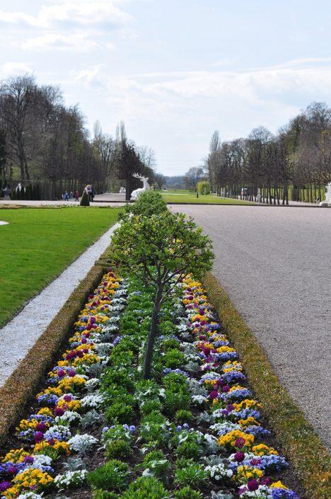 Blumenbeet in Schwetzingen